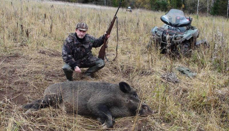 Охота на кабана в Украине
