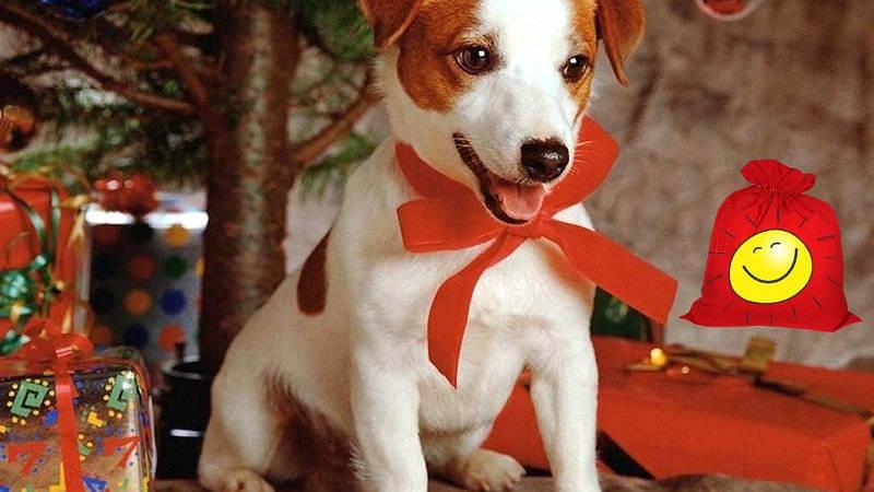 Подарки для собак