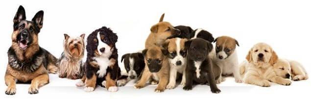 Предпочтение породам собак