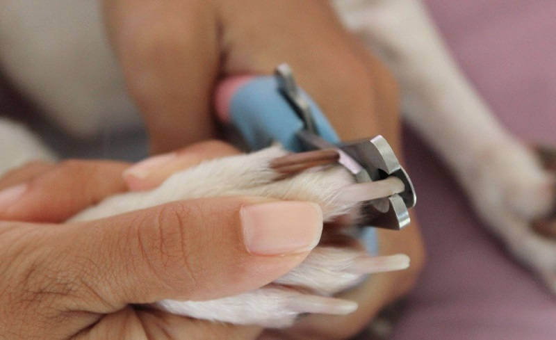 Как стричь когти собаке