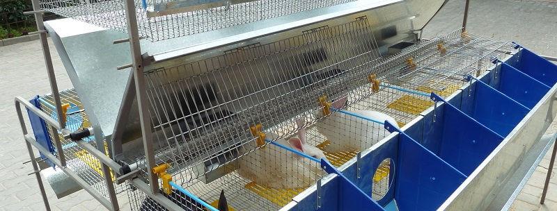 Мини-фермы для кроликов