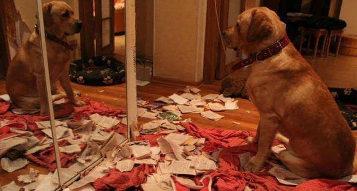 Собака хулиганит в квартире