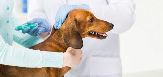 ветеринарные центры
