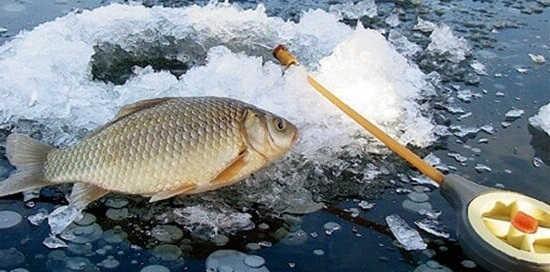 Зимняя ловля карася на мормышку видео