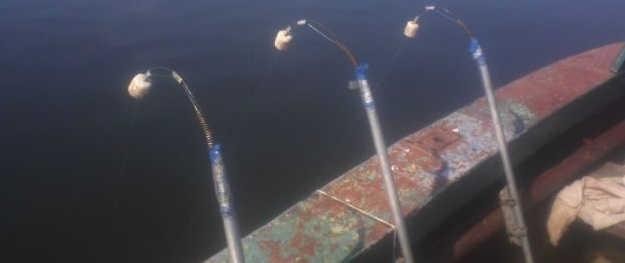 Видео ловли леща с лодки на донку