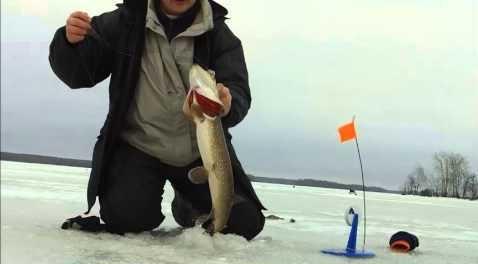 Видео ловли на жерлицы зимой на р. Волга
