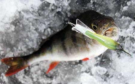 Ловля окуня зимой на озере Ладога