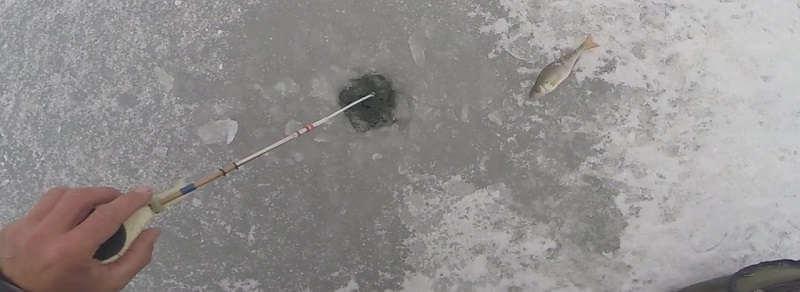 Ловля окуня зимой на малька