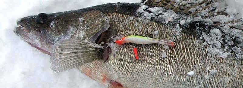 Ловля судака зимой на Горьковском водохранилище видео