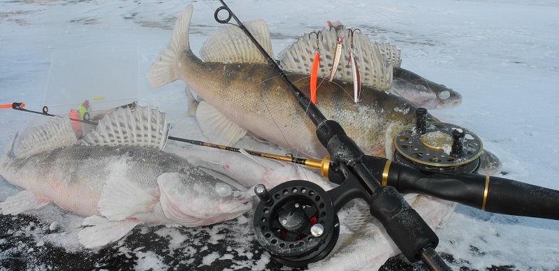 Тактика ловли судака зимой