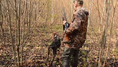 Охота на зайца с легавой - Охота и рыбалка в России и за рубежом
