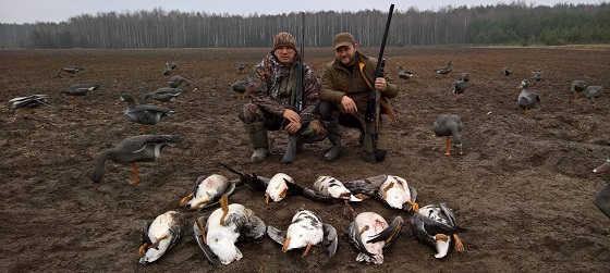 Видео охоты на гуся в 2017