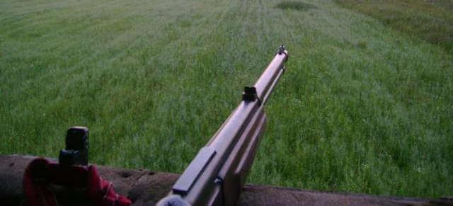 Охота на кабана в поле