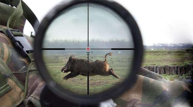 Охота на кабана нарезка