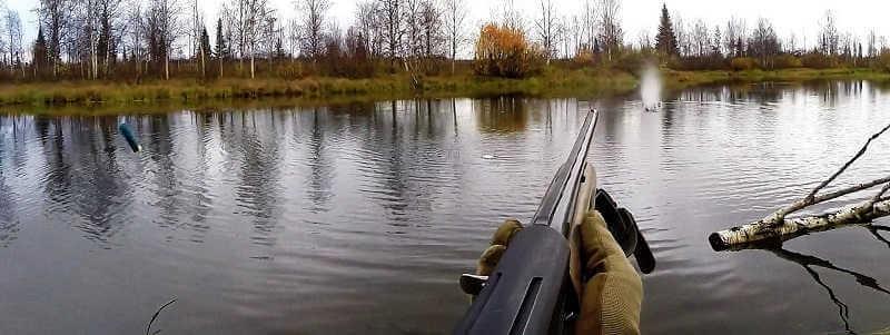 Охота на утку осенью с подхода