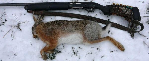 Охота на зайцев зимой