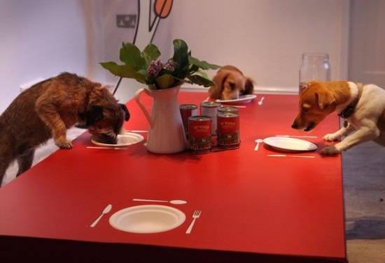 Ресторан для собак