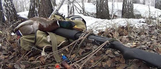 Видео весенней охоты на тетерева
