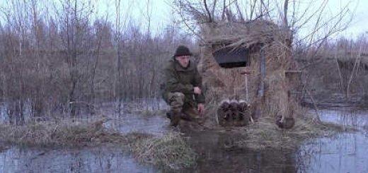 Видео весенней охоты на утку