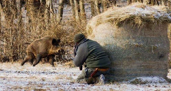 Видео об охоте на кабанов