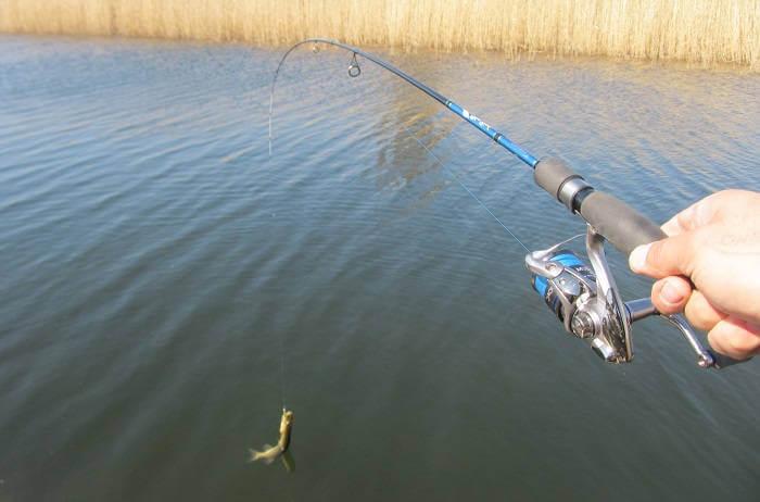 ловля на балансиры на мелководье