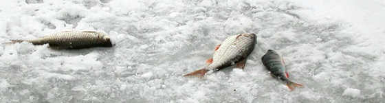 Видео ловли плотвы зимой