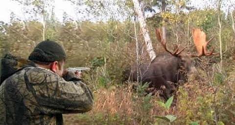 Видео-нарезки охоты на лося