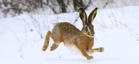 Охота на зайца 2018 видео
