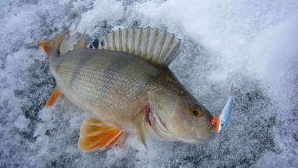 Окуневая рыбалка зимой видео