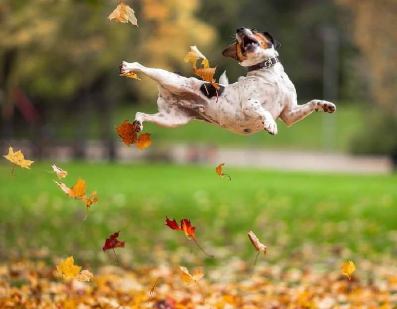 Осенняя линька у собак
