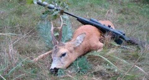 Осенняя охота на косулю в 2017 видео