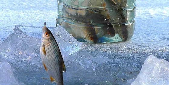 Первая рыбалка в 2018 году