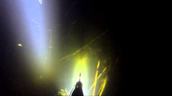 Подводная охота в Тамбове