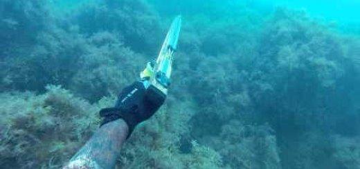 Подводная охота в Индийском океане