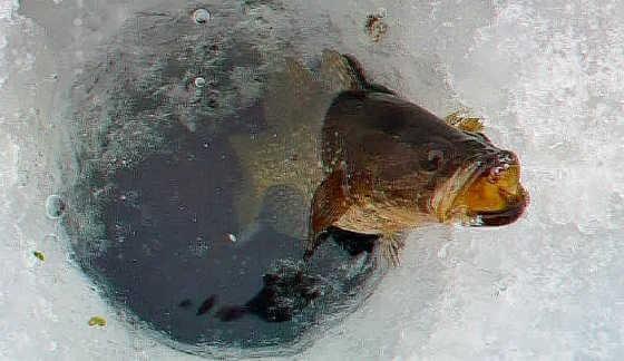 Зимняя ловля ротана в 2016