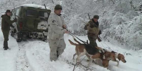 Видео зимней охоты на зайца в Ростовской области