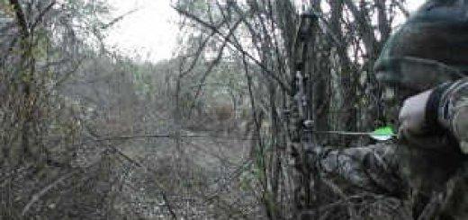 Охота на лося с луком видео