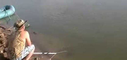 Ловля сазана на реке Урал видео