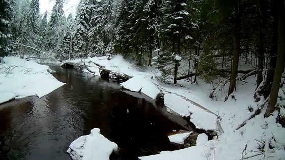 Охота на бобра зимой с ружьем видео
