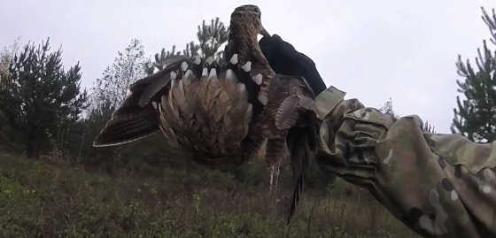 Осенняя охота с подхода в Костромской области видео