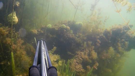 Подводная охота для начинающих видео