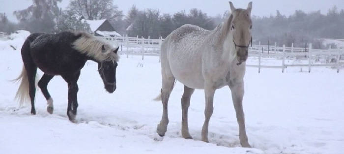 Психология лошади