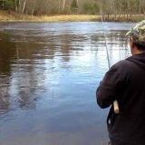 Охота на лося - Охота и рыбалка в России и за рубежом
