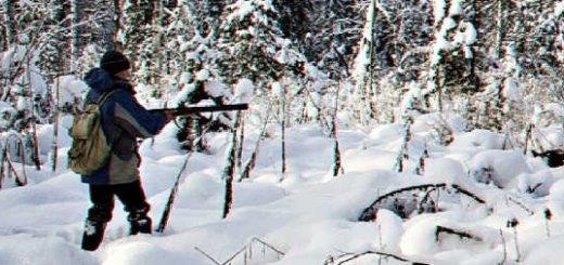Загонная охота на кабанов зимой видео