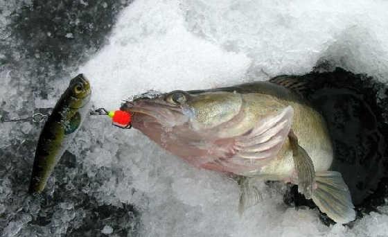 Зимняя ловля на раттлины видео