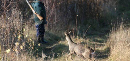 Как охотиться на косулю