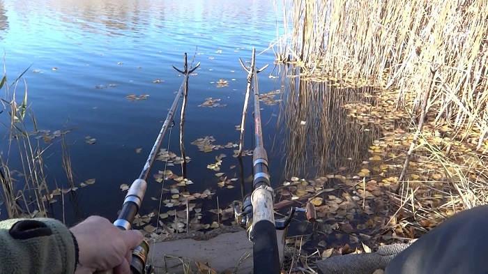 Ловля фидером карася осенью