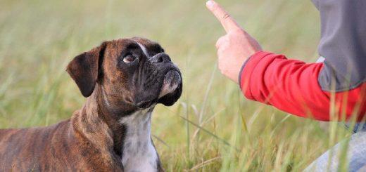 Награда в дрессировке собаки