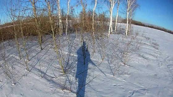 Неудачи на охоте на зайца зимой видео