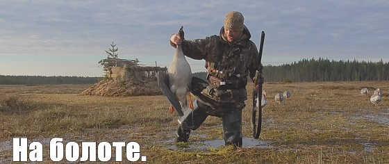 Охота на гусей на болоте в Карелии видео